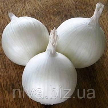 Вайт Вінг F1 (White Wing F1) насіння  цибулі ріпчастої Bejo 250 000 насінин
