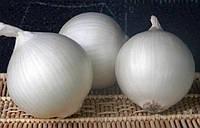 Орізаба F1 (Orizaba F1) насіння цибулі білої Seminis 250 000 насінин