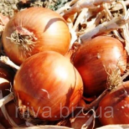Аруба F1 насіння цибулі ріпчастої Sakata 250 000 насінин