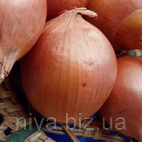 Бургос F1 насіння цибулі ріпчастої Vilmorin 250 000 насінин