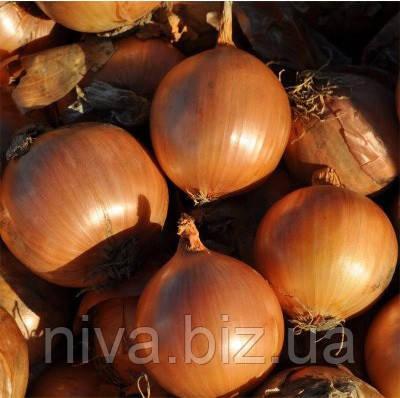 Дормо F1 насіння цибулі ріпчастої Hazera 250 000 насінин