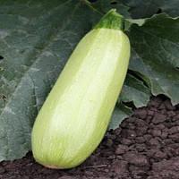 Александрия F1 семена кабачка Agri Saaten 100 сем