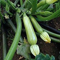 Сцилли F1 Scilly F1 семена кабачка Seminis 500 сем