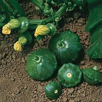 Старшип F1 семена патиссона зеленого Syngenta 100 семян