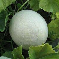 КС 7037 F1 насіння дині Kitano Seeds 1 000 насінин