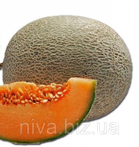 Карібіан Голд F1 насіння дині Rijk Zwaan 1 000 насінин