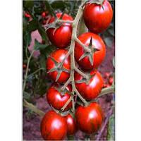 Тайгер F1 семена томата идет.  селекции Yuksel 100 семян