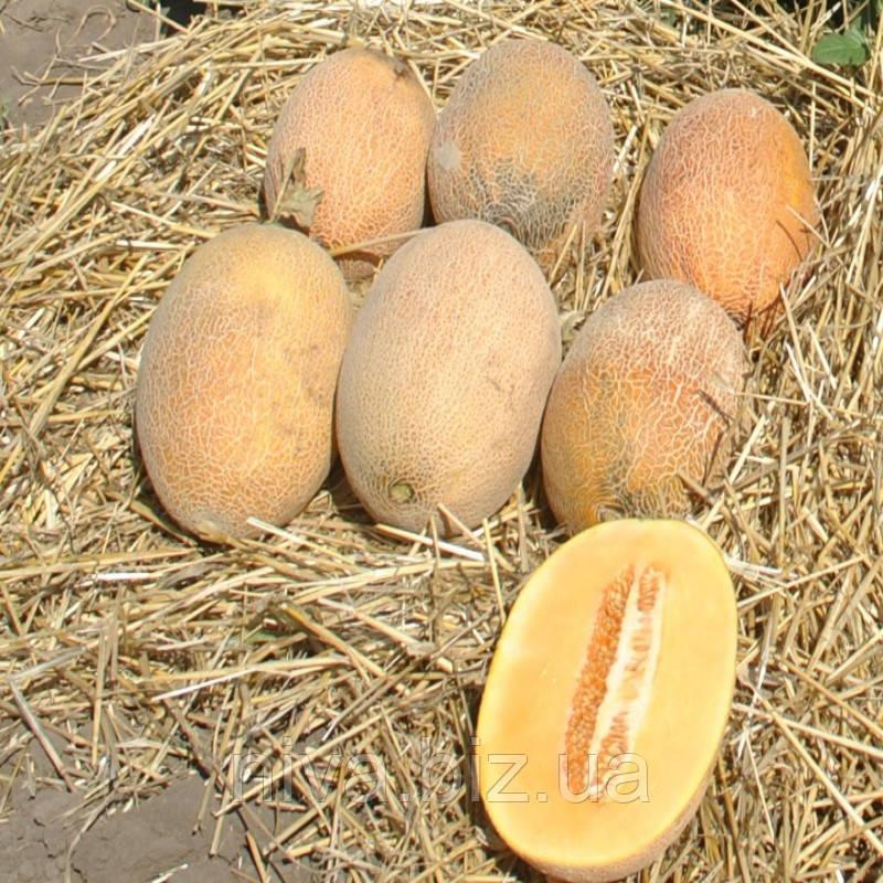 Робаст насіння дині Hollar Seeds 1 000 насінин