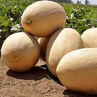 Раймонд F1 насіння дині Hazera 1 000 насінин