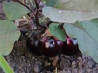 Віолетта насіння баклажану Элітний ряд 2 г