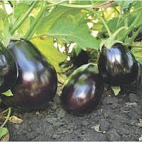 Чемодан F1 насіння баклажану Lark Seeds 1 000 насінин