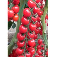 Марголь F1 семена томата черри Yuksel 100 семян