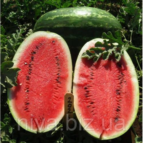 Ерлі Саманта F1 насіння кавуна United Genetics 1 000 насінин