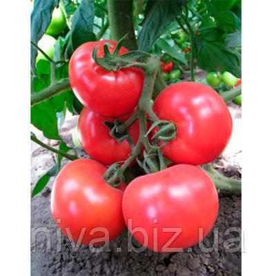 Кітару (КС 14) F1 насіння томату індет. рожевого Kitano Seeds 500 насінин