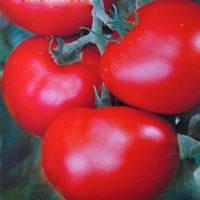 Камелия F1 семена томата индет. Элитный Ряд 5 г