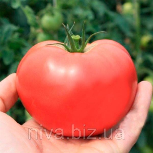 ТЕХ 2721 F1 семена томата Takii Seeds 250 семян