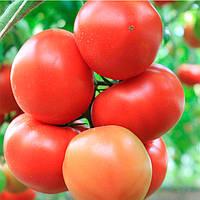 Аджилис F1 E15B.50205 F1 семена томата индет. Enza Zaden 500 семян