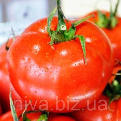 Айвенго F1 (Ivanhoe F1) семена томата индет. Rijk Zwaan 100 семян