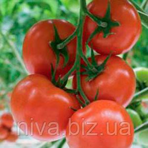 Беллавиза F1 (Belavisa F1) семена томата индет. Rijk Zwaan 100 семян