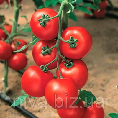 Джадело F1 семена томата индет. Vilmorin 500 семян