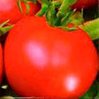 Корнелия F1 семена томата индет. Элитный Ряд 500 г