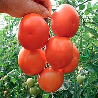 Лилос F1 (Lilos F1) семена томата индет. Rijk Zwaan 25 семян