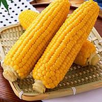 Старшайн F1 насіння кукурудзи солодкої Syngenta 100 000 насінин