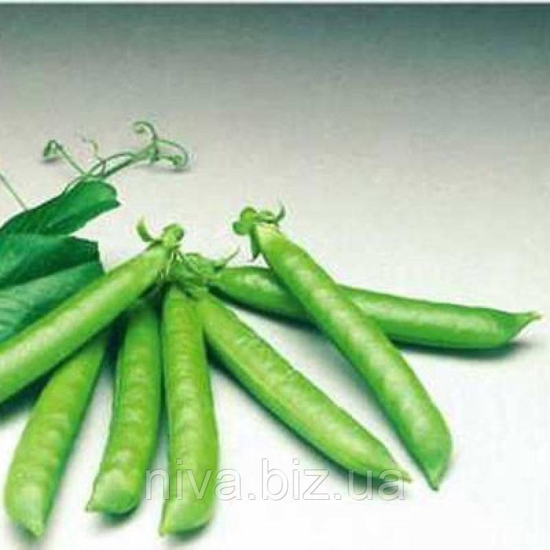 Сомервуд насіння гороху овочевого Syngenta 100 000 насінин