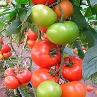 Матиас F1 (Matias F1) семена томата индет. DRS-Seminis 25 семян