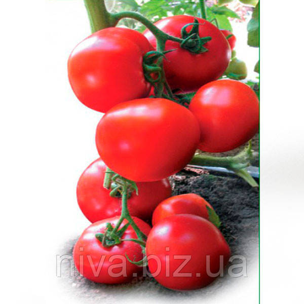 Ядвига F1 семена томата полудет. типа Kitano Seeds 100 семян