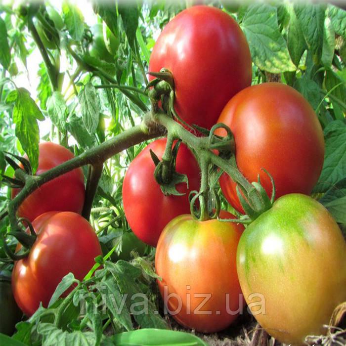 Ляна розовая семена томата дет розового Элитный Ряд 5 г