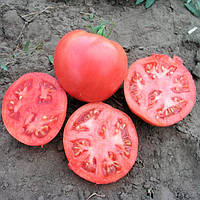 Тарпан F1 семена томата розового дет. Nunhems 100 семян