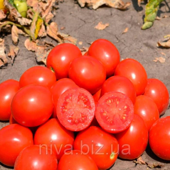 2206 F1 семена томата дет.  Heinz/Lark Seeds 500 семян