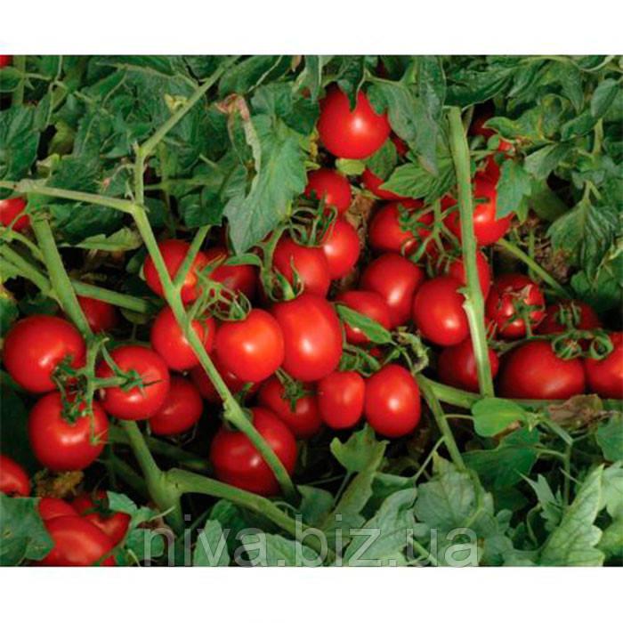 7204 F1 семена томата дет. Heinz/Lark Seeds 500 семян