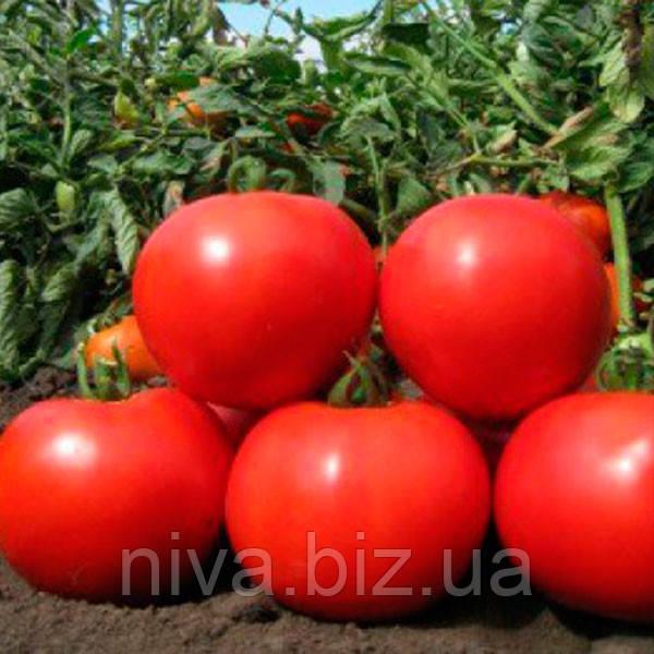 Лапилло F1 CRX 71888 семена томата дет. Agri Saaten 10 000 семян