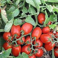 3402 F1 семена томата дет. Heinz/Lark Seeds 5 000 семян