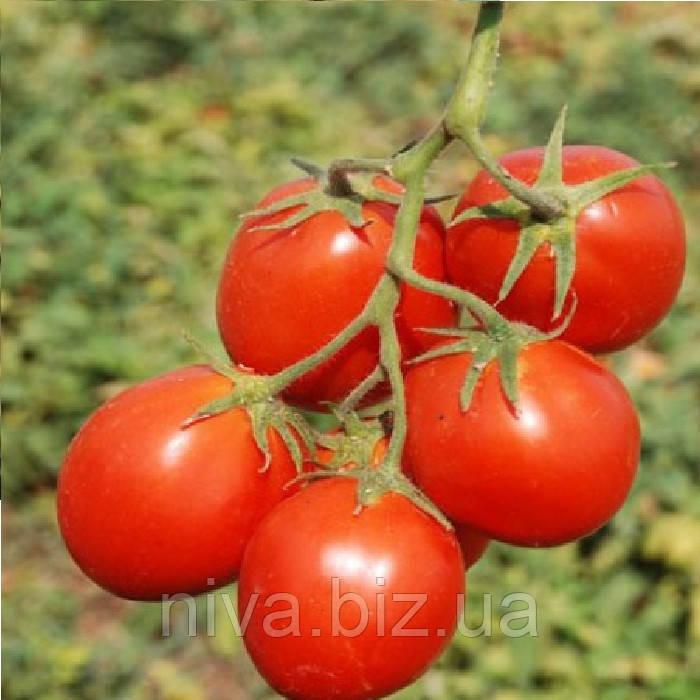 Керо F1 семена томата дет. ESASEM 25 000 семян