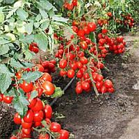 Кинг F1 семена томата дет. Lucky Seed 500 семян