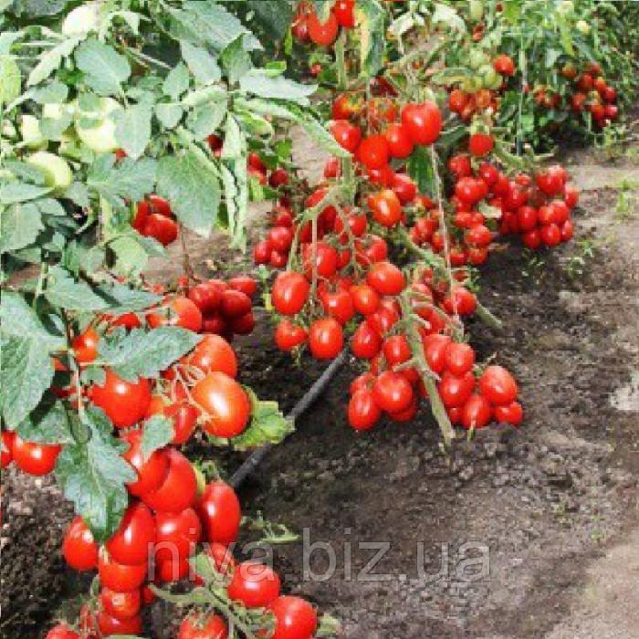 Кинг F1 семена томата дет. Lucky Seed 100 семян