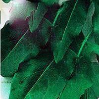 Широколистный семена щавля Moravoseed 100 г