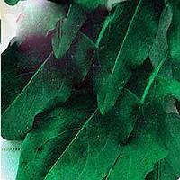 Широколистный семена щавля Moravoseed 250 г