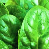 Матадор семена шпината Griffaton 500 г