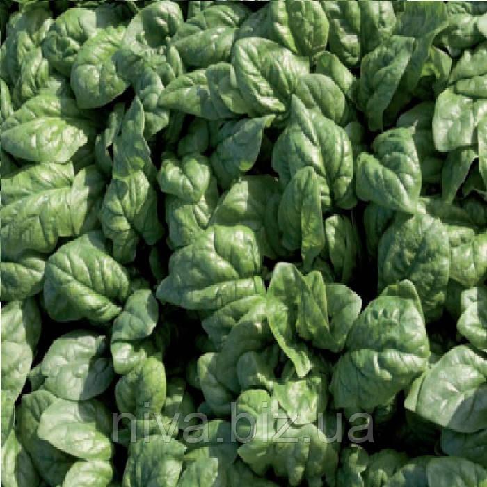 Спирос F1 (Spiros F1) семена шпината Bejo 10 000 семян