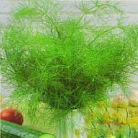 Амброзия семена укропа Chrestensen 500 г