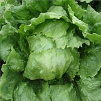 Дизайн семена салата тип Айсберг Enza Zaden 5 000 семян