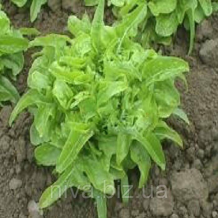 Дубачек семена салата типа Дубовый лист Moravoseed 10 000 семян