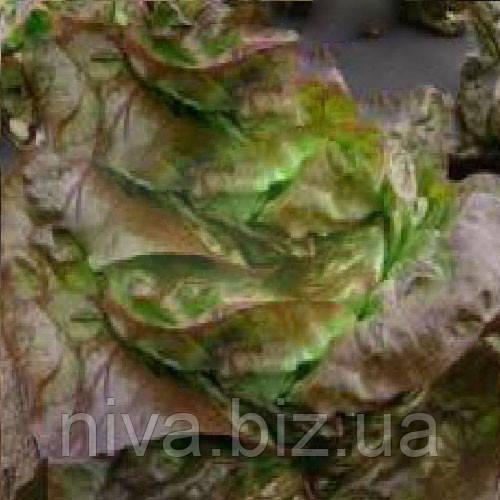 Сагим семена салата маслянистого Moravoseed 10 000 семян