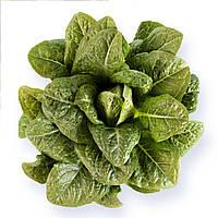 Авона (Auvona) семена салата типа Ромен Rijk Zwaan 5 000 драже