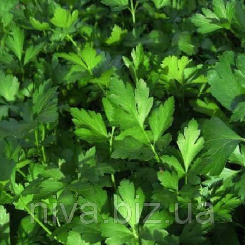 Гиганте де Италия семена петрушки листовой Semo 500 г