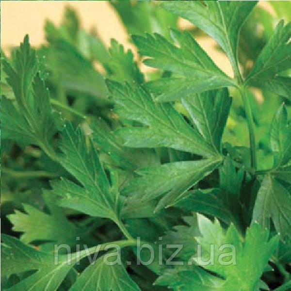 Гиганте Италия семена петрушки листовой SAIS 50 г